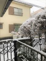 ブログ 雪.jpg